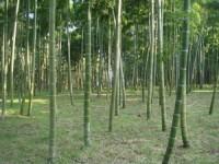 鈴木竹の子山